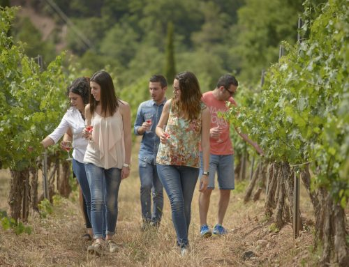 The catalan newspaper -Ara-  recommends wine tourism at the Abadal winery