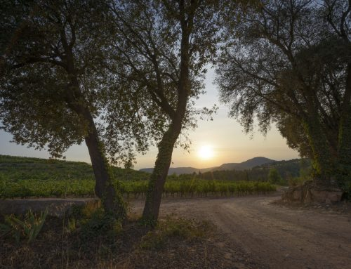 Abadal wine experiences reveal the essence of Bages